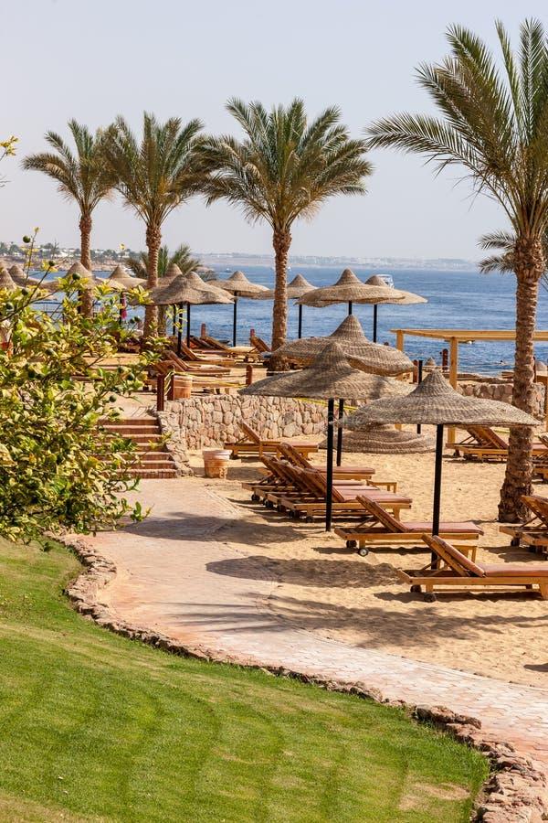 Download Palmowa Aleja Na Tropikalnej Egipcjanin Plaży Zdjęcie Stock - Obraz złożonej z natura, ocean: 53781348