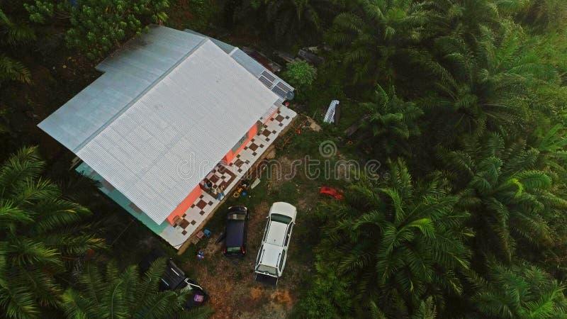 Palmowa kultywacja przy ranau Sabah zdjęcie royalty free