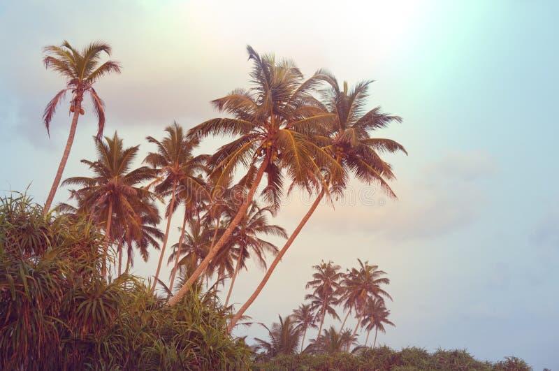 Palmowa plantacja zdjęcia stock