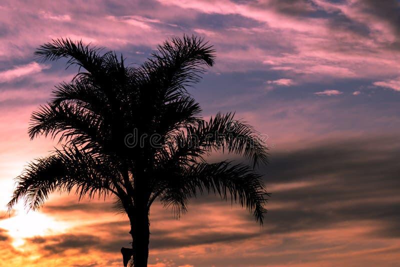 Palmowa sylwetka obrazy stock