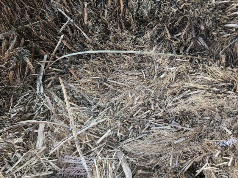 Palmowa tkanka obraz stock