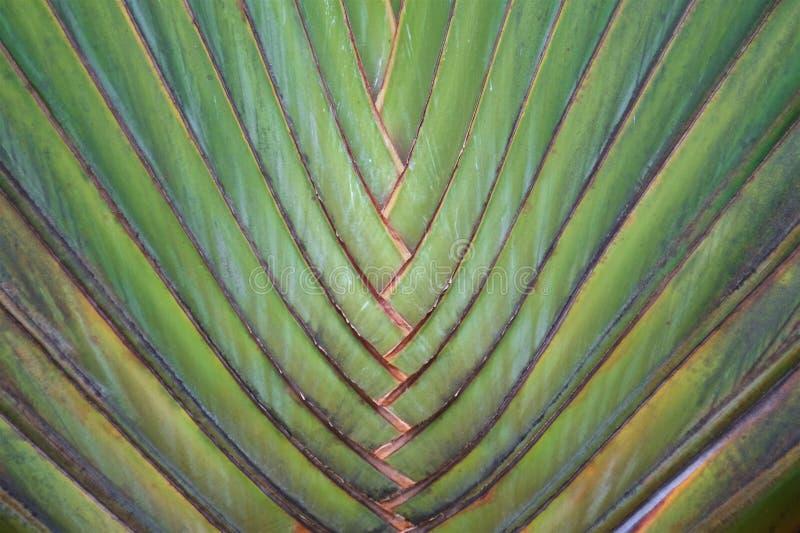 Palmowe gałąź wzdłuż bagażnika tworzą abstrakta wzór fotografia royalty free