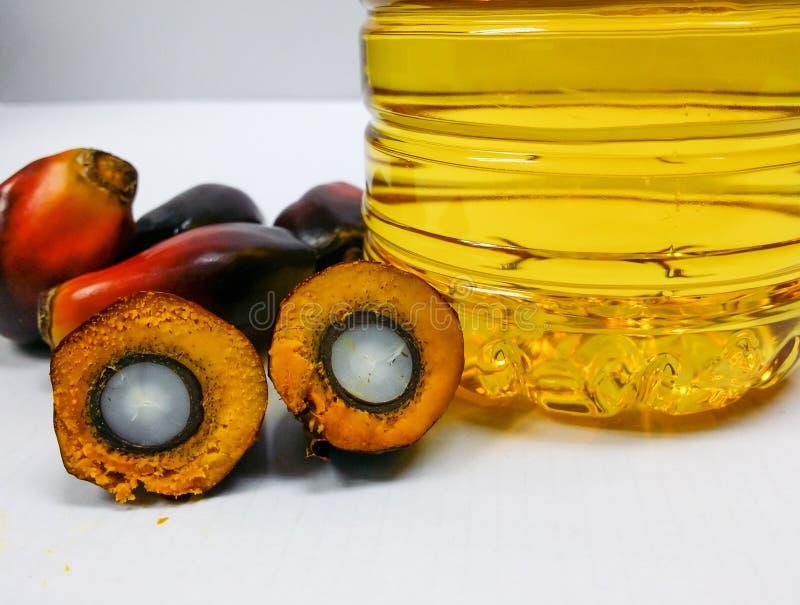 Palmowe owoc i olej palmowy, jeden owoc cią pokazywać swój nasiono obrazy royalty free