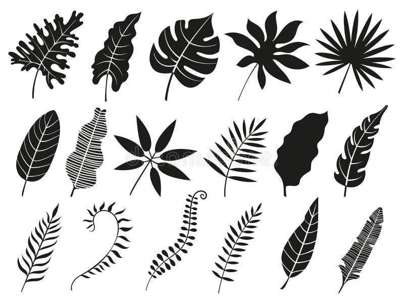 Palmowego liścia sylwetka Monstera frond, roślina opuszcza sylwetki i tropikalni fronds odizolowywać palm wektorowe ikony ustawia ilustracji