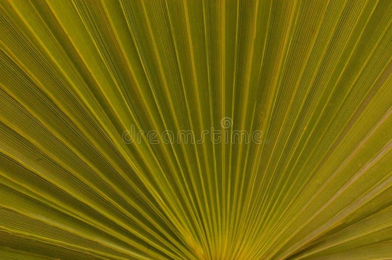 Palmowego liścia tła drzewny kokosowy zakończenie up zdjęcia royalty free