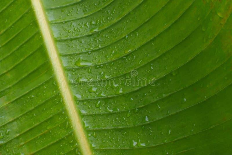 Palmowego liścia tekstury zbliżenie zdjęcie stock