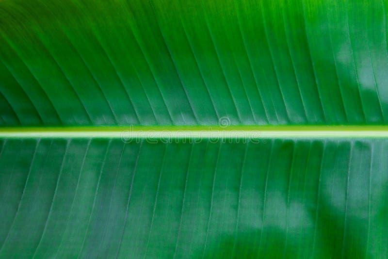 Palmowego liścia zakończenie up kosmos kopii Zielony tło obrazy stock