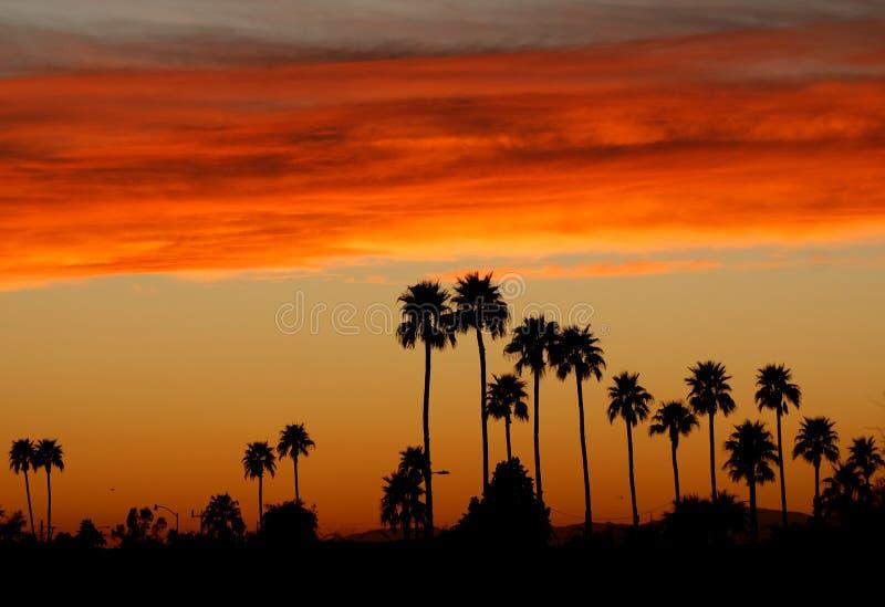 palmowi feniksa zmierzchu drzewa obraz stock