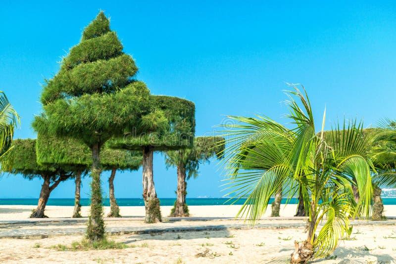Palmowi i naszywani egzotyczni drzewa w parku na plaży zdjęcie royalty free