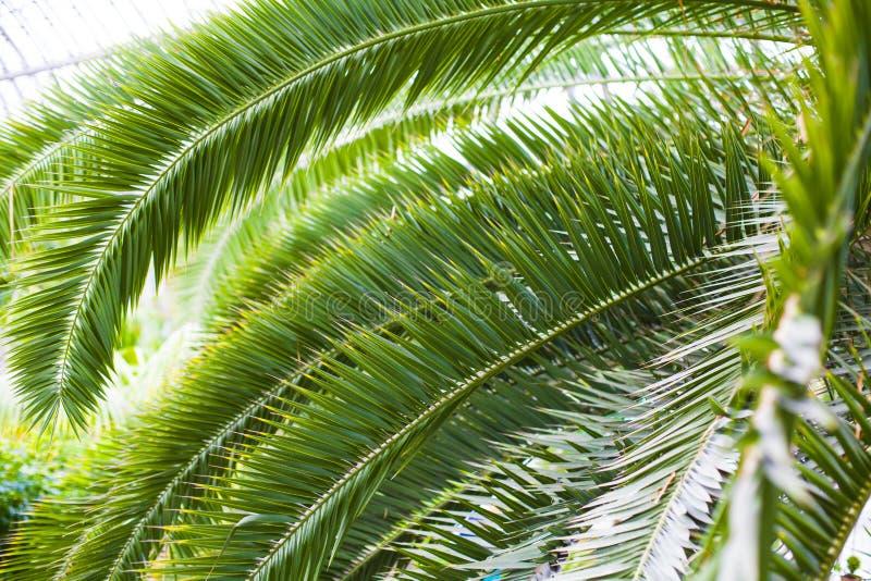 Palmowi liście obraz stock