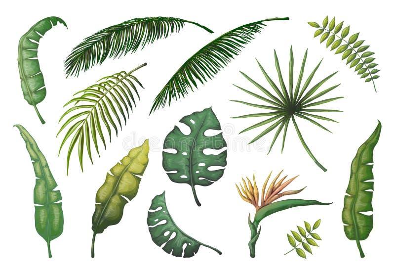 Palmowi liście Dżungli ręki rysujący drzewa, kwiecistego rocznika bananowe kokosowe dekoracyjne rośliny, zielony egzotyczny monst royalty ilustracja