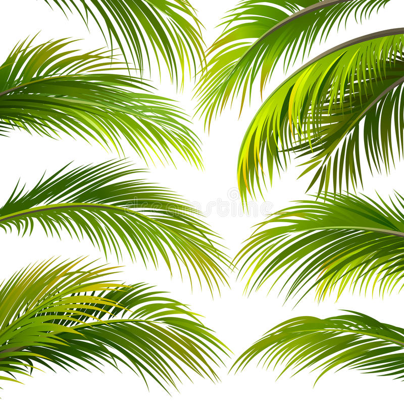 Palmowi liście wektor ilustracja wektor