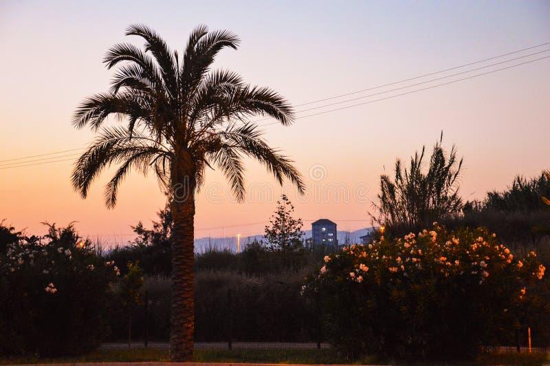Download Palmowi sylwetek drzewa zdjęcie stock. Obraz złożonej z palma - 53786146