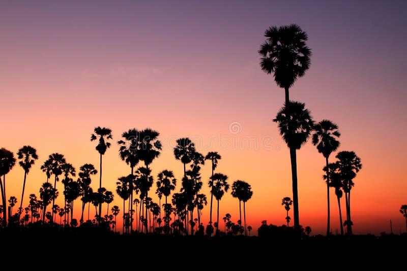 palmowi sylwetki zmierzchu drzewa obrazy royalty free