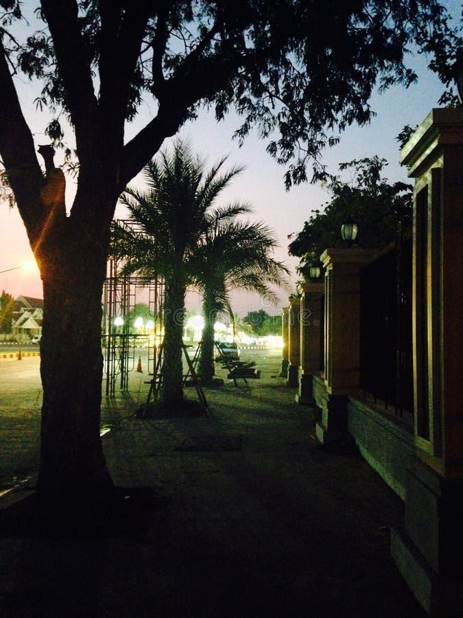 Palmowy cień obrazy royalty free