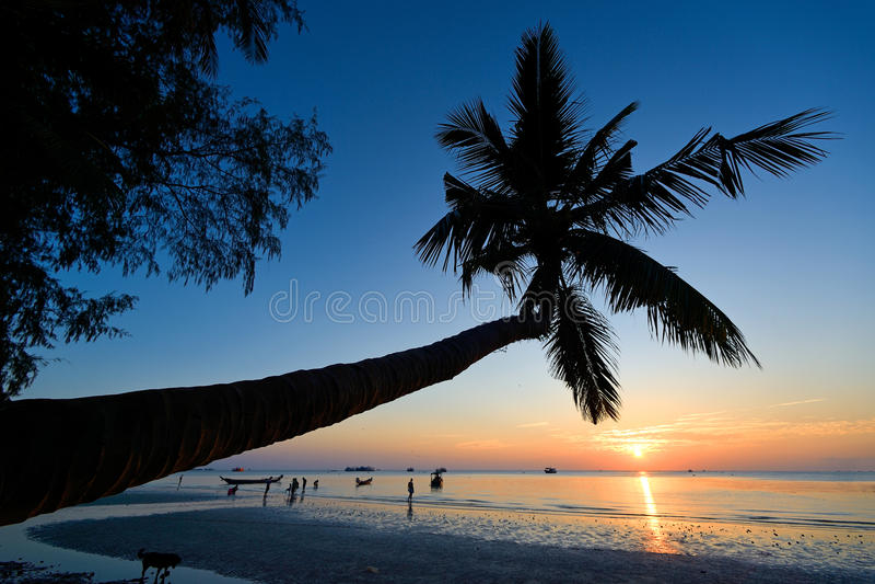 Palmowy koh Tao fotografia royalty free