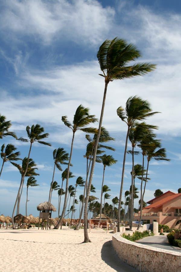 palmowy kurort zamiatający drzewa wiatr zdjęcia royalty free