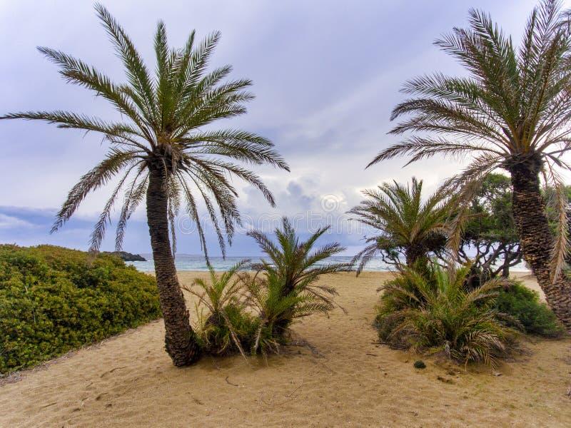 Palmowy las w Crete obrazy royalty free