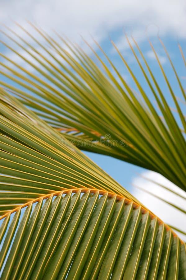 Palmowy Liść Bezpłatne Obrazy Stock