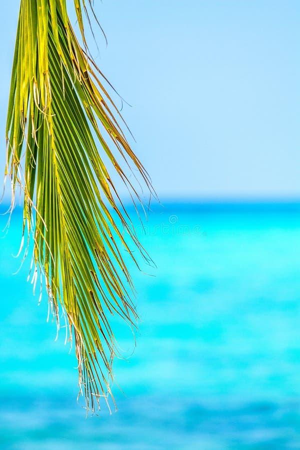 Palmowy liść, błękitny morze i słoneczny dzień, fotografia stock