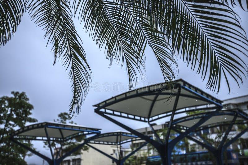 Palmowy liść i dużo zrzucamy obraz royalty free