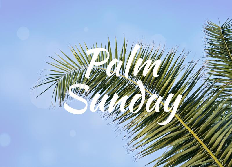 Palmowy liść przeciw niebieskiemu niebu z tekstem Palmowa Niedziela fotografia stock