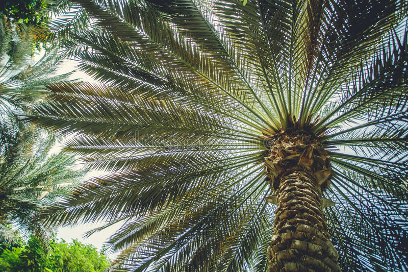 Palmowy outside w miasta Dubaj emiratach fotografia royalty free