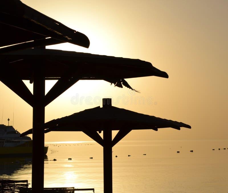 Palmowy plażowy parasol przy zmierzchem obrazy stock