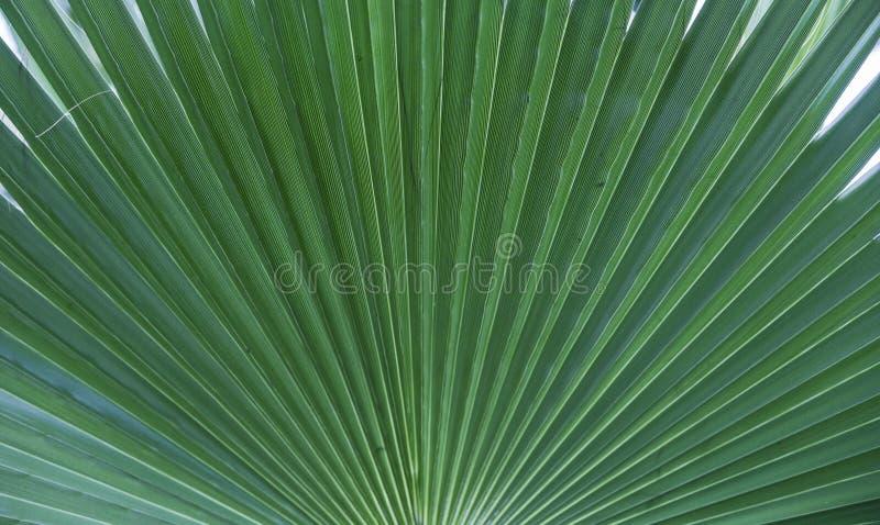 Palmowy urlop tekstury tło zielona tło dżungla cuba karaibski kokosowy drzewko palmowe obrazy royalty free