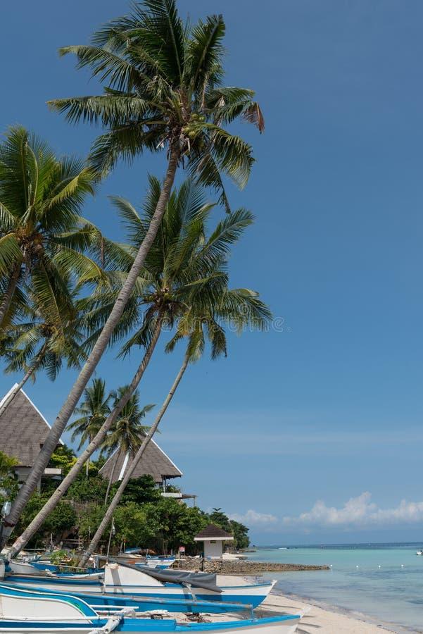 Palmowy warkocz Filipiny zdjęcie stock