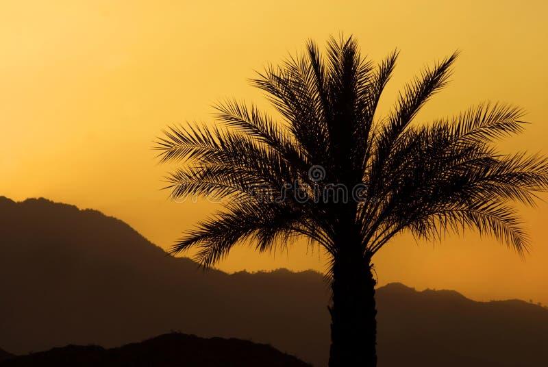 palmowy zmierzch obrazy royalty free