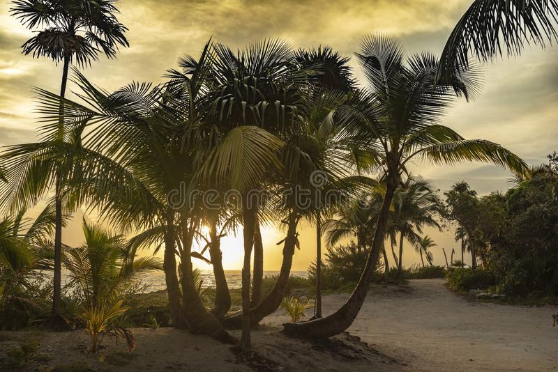 Palmparadijs in de Caraïben stock foto