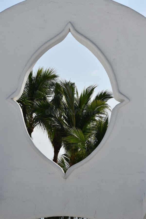 Palmportaal stock afbeelding