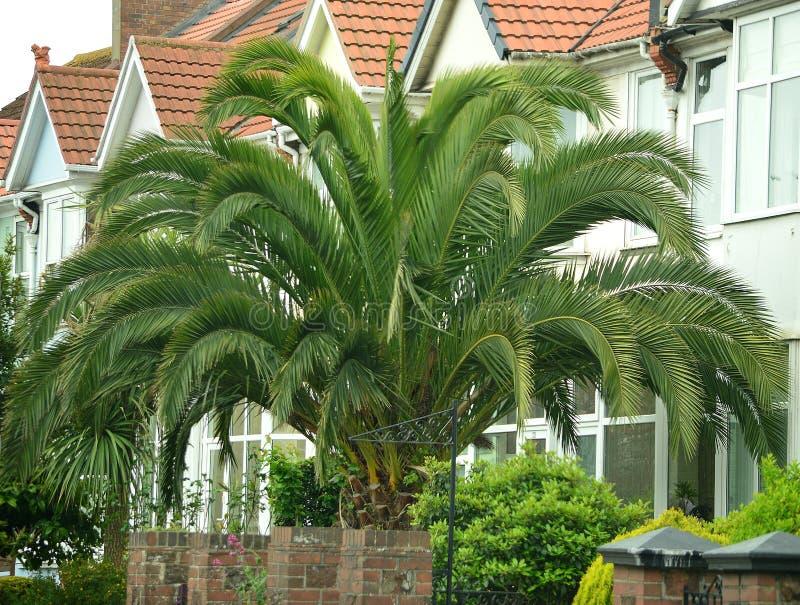 Palmreus royalty-vrije stock afbeeldingen