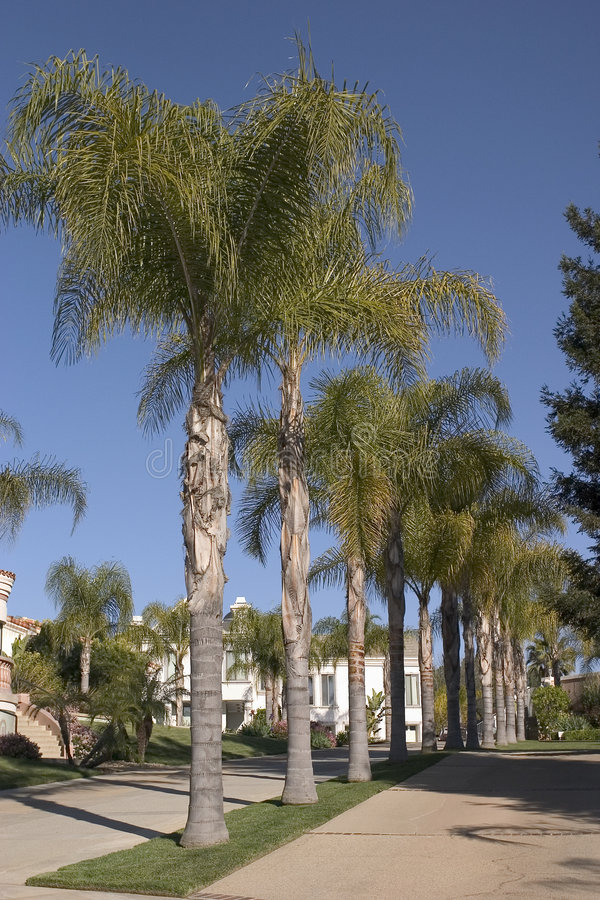 Download Palms stock image. Image of houses, palm, summer, nature - 101471