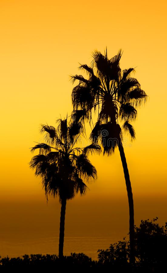 Download Palms stock image. Image of ocean, silence, hawaii, malaysia - 1603101