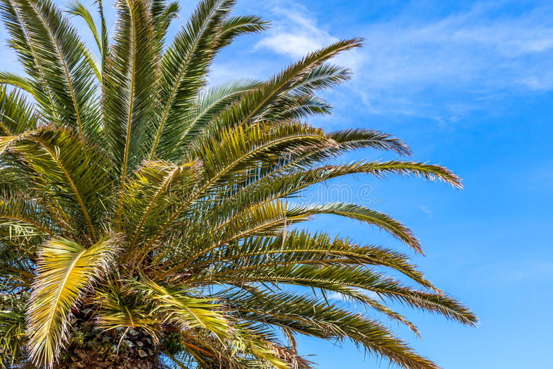 Palms royalty free stock photography