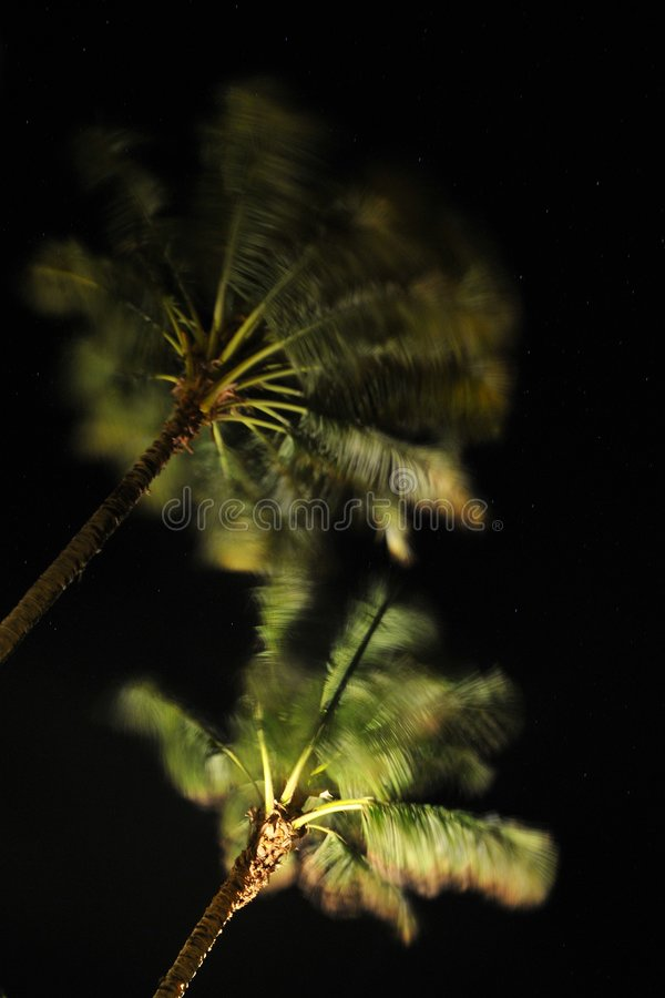 Download Palms stock photo. Image of breeze, night, tree, plant - 5678034