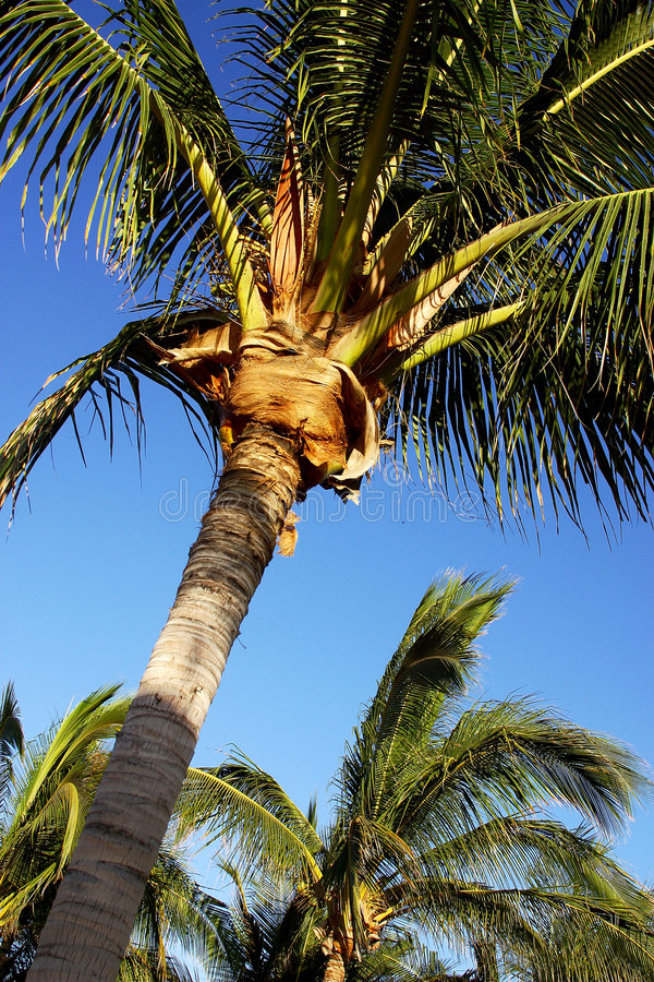 Palms stock images