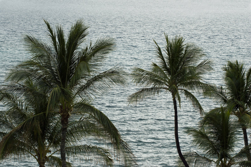 Palms above Ocean royalty free stock images