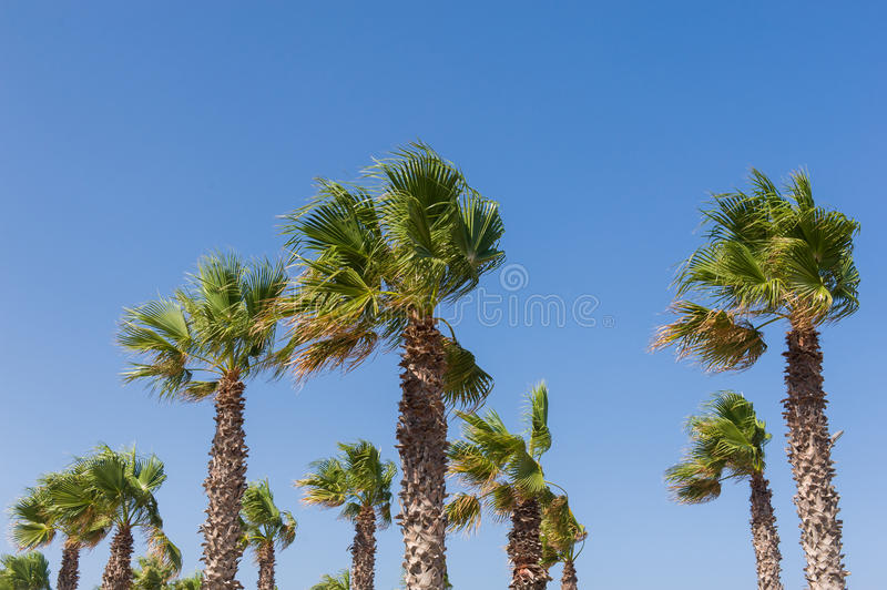 The palms royalty free stock photography