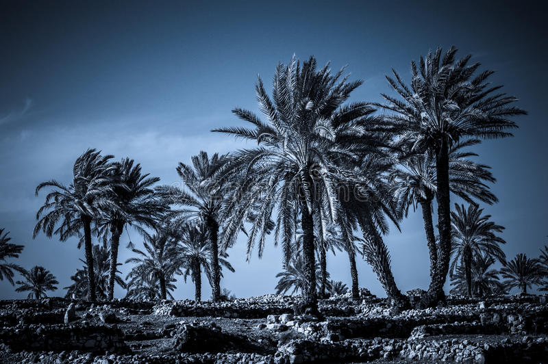 Palms in Armageddon, Israel. Dramatic scenery at the archaeological site in Megiddo (Armageddon) in Israel - symbol of Apocalypse royalty free stock photo