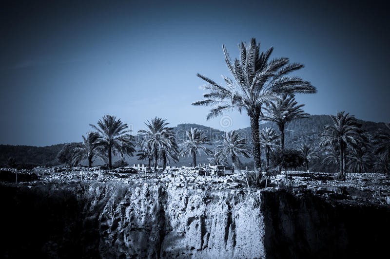 Palms in Armageddon, Israel. Dramatic scenery at the archaeological site at the Tel Megido (Armageddon) in Israel - symbol of Apocalypse royalty free stock images