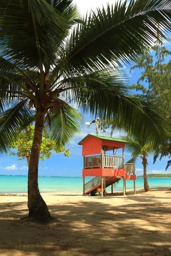 Download Palms on the Beach stock image. Image of water, fajardo - 13699191