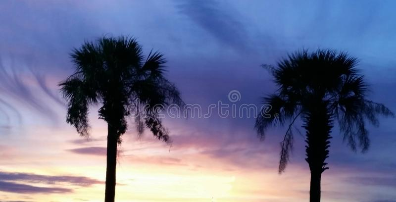 2 palms stock photos