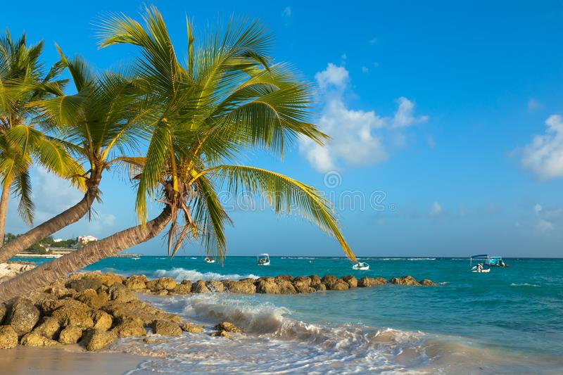 Palms bent on the shore of the ocean at sunset. Worthing Beach in Barbados stock photos