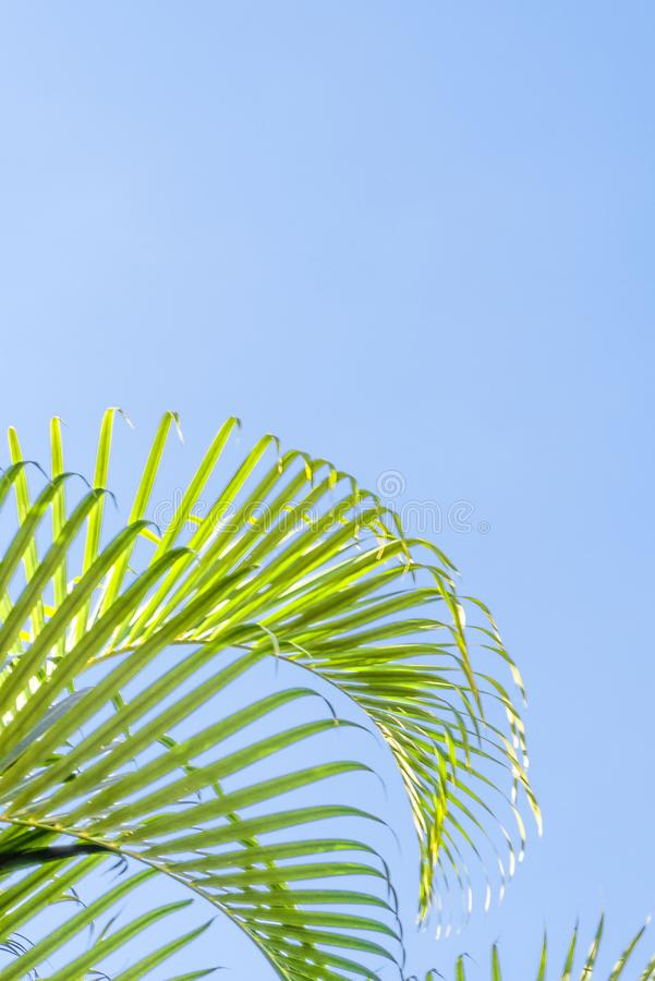 Palms at beuatiful shiny blue sky background.  royalty free stock photography