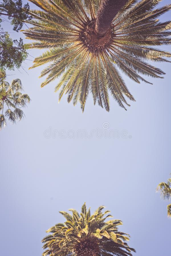 Palms of Beverly Hills. Vintage Rodeo Drive Beverly Hills Palm Trees Los Angeles California royalty free stock images