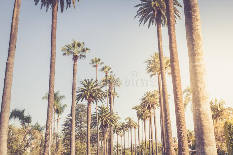 Palms of Beverly Hills. Vintage Rodeo Drive Beverly Hills Palm Trees Los Angeles California in a sunset light stock image
