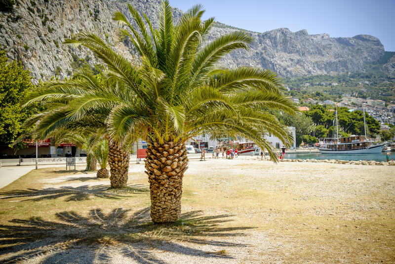 Palms with big green leaves on the european beach on sunny holiday day, visible port, harbour royalty free stock images